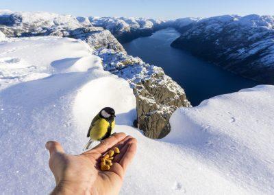 Pulpit hike bird