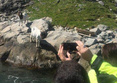 Wild-life-along-the-Lysefjord-1030x773