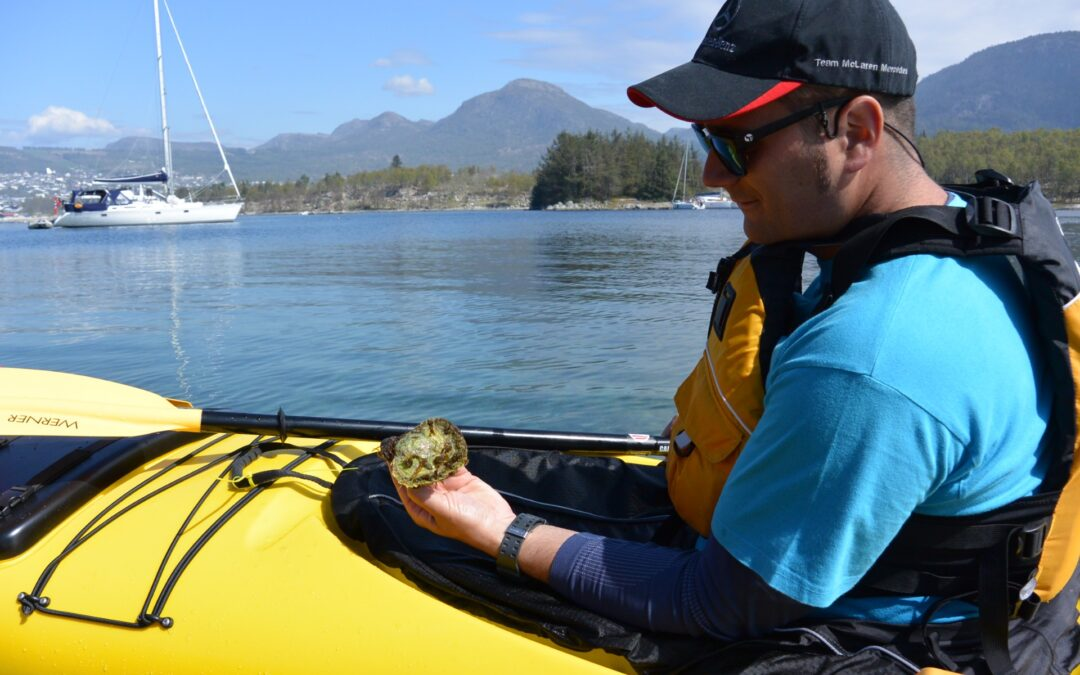 Kayak and fjord taste skjell