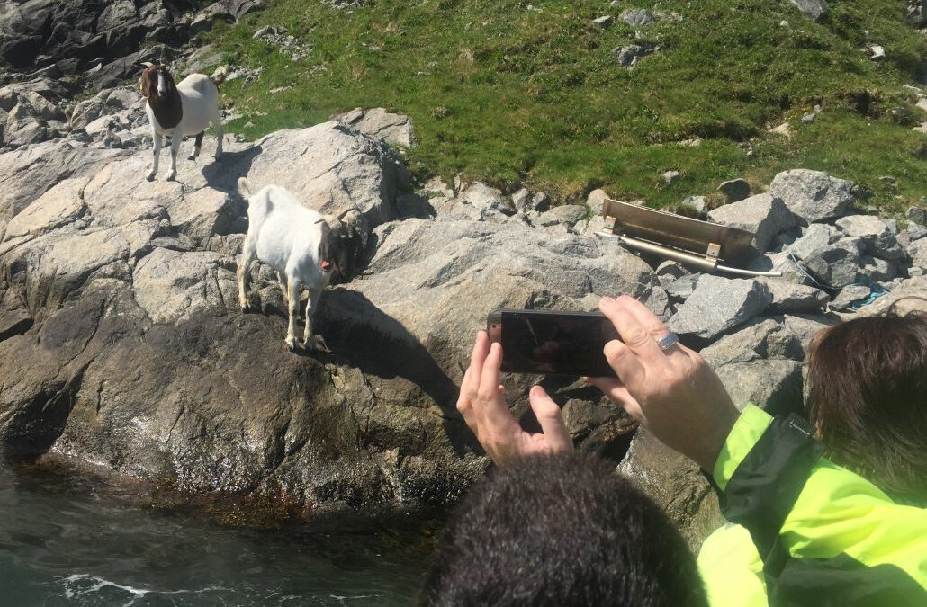 Wild-life-along-the-Lysefjord-1030×773